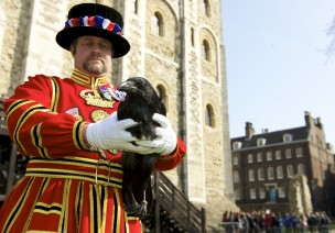 Tower-of-London_Raven-Master (1)